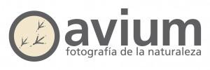 AVIUM_fotografia